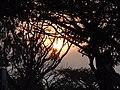 Sunrise bandipur national park, india.jpg