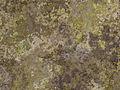 Surface Texture 005.jpg
