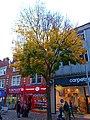 Sutton High Street trees (8).jpg