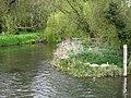 Swans nesting - geograph.org.uk - 1244750.jpg