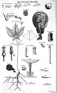 Table of natural history, 1728 Cyclopaedia