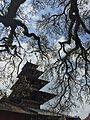 Temple framed by trees.jpg