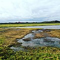 Texel - grasland.jpg