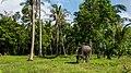 Thailand - Koh Phangan (25007745281).jpg