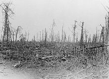 A photo of a devastated treeline showing broken trunks and limbs.