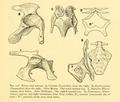 The Osteology of the Reptiles-163 iuhghjhgv iuhg.png