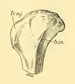 The Osteology of the Reptiles-181 ffewedf dfg dfg hfggfgtghty uhb fg.png
