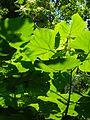 The Pallisades Interstate Park, New Jersey. August 2008 - panoramio - Gary Miotla (1).jpg