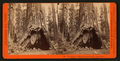 The Pioneer's Cabin, 32 feet in diameter ; and Pluto's Chimney, Big Tree Grove, Calaveras County, by Lawrence & Houseworth.png