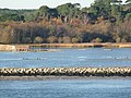 The edge of Brownsea Lagoon - geograph.org.uk - 1106065.jpg