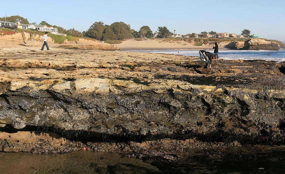 Tide pools in Santa Cruz from Spray-splash zone to low tide zone