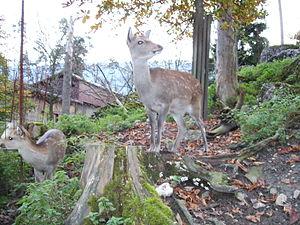Natur- und Tierpark Goldau - Deer in the park