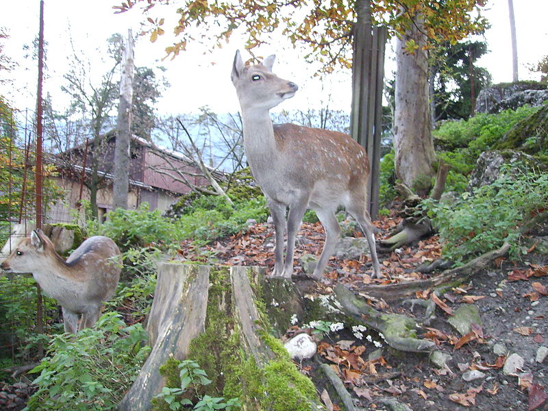 Goldau - Nature Park & Zoo