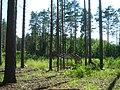 Tomsky District, Tomsk Oblast, Russia - panoramio (83).jpg