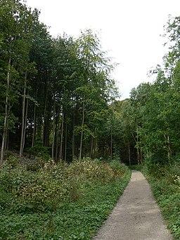 Track through Millington Wood - geograph.org.uk - 555659