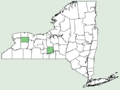 Tragopogon × neohybridus NY-dist-map.png