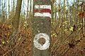 Trail WPN Pozegowo.JPG