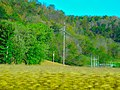 Transmission Electrical Line - panoramio.jpg
