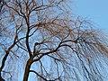 Tree (5494556895).jpg