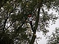 Tree surgeon at work (1) - geograph.org.uk - 1006252.jpg