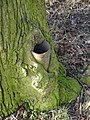 Tree swallowing lamp post.JPG