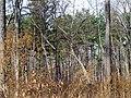 Trees, Jordan Lake SP NC 1478 (5487272594).jpg