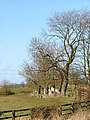 Trees Aligning Redmarsh Road - geograph.org.uk - 151454.jpg