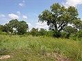 Trees and stuff (393925288).jpg