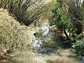 Trekking near water stream @ Wayanad wildlife Sanctuary - panoramio (1).jpg