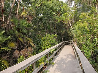 Geography and ecology of the Everglades - In a tropical hardwood hammock, plants are very dense and diverse.