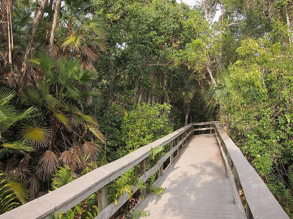 Tropical hardwood hammock on Everglades National Park Mahogany Hammock Trail