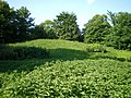 Tumulus at Fiddlers Hill - geograph.org.uk - 1403832.jpg