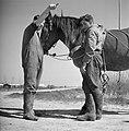 Twee mannen met een paard in het Joodse werkdorp in de Wieringermeer, Bestanddeelnr 254-4925.jpg