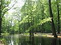 ULE-Wald.jpg