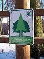 Významný strom Domušice - Rovina.jpg