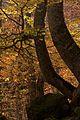 Val Aran vall riu Joeu 8689-01.jpg