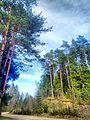 Valdaysky District, Novgorod Oblast, Russia - panoramio (3407).jpg