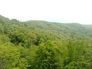 Parambikulam Tiger Reserve - Image: Valley View Parambikulam 02