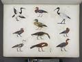 Varie specie d'uccelli rappresentati nelle cacce. La maggior parte sono distinti coi loro antichi nomi scritti in geroglifici (NYPL b14291206-425567).tiff