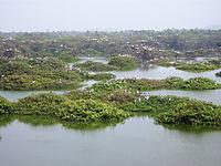 Vedanthangal Lake.JPG