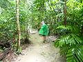 Veki Jungle of Guatemala, Tikal.JPG