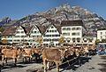 Viehschau in Glarus (18948011424).jpg