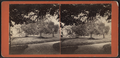 View of a garden, by J.L. & H.A. Jordan.png