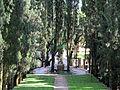 Villa i tatti, ext., filare di cipressi 03.JPG