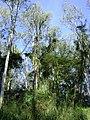 Visão geral de árvores.jpg