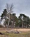 Vitoria - Parque de Olarizu - Pinar HDR -BT- 01.jpg