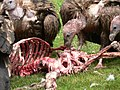 Vulture - Sky burial.jpg