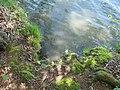 Vyžlovský rybník (023).jpg