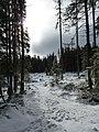 Vysoké Tatry, Mlynická dolina, zima 2014 (3).JPG
