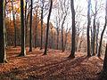 Wald bei Bierbach 2012-11-19.JPG